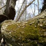 Por qué no debe remover un árbol muerto usted mismo