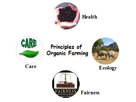 Abrazar la agricultura orgánica para mejorar la salud