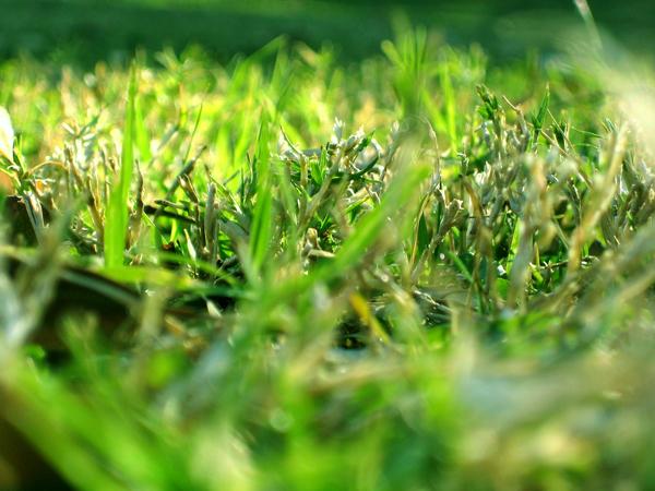 Ponga verde a su patio trasero: Más verde significa más limpio