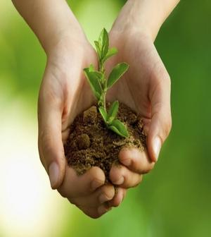 Jardinería Sostenible y su Importancia para el Futuro