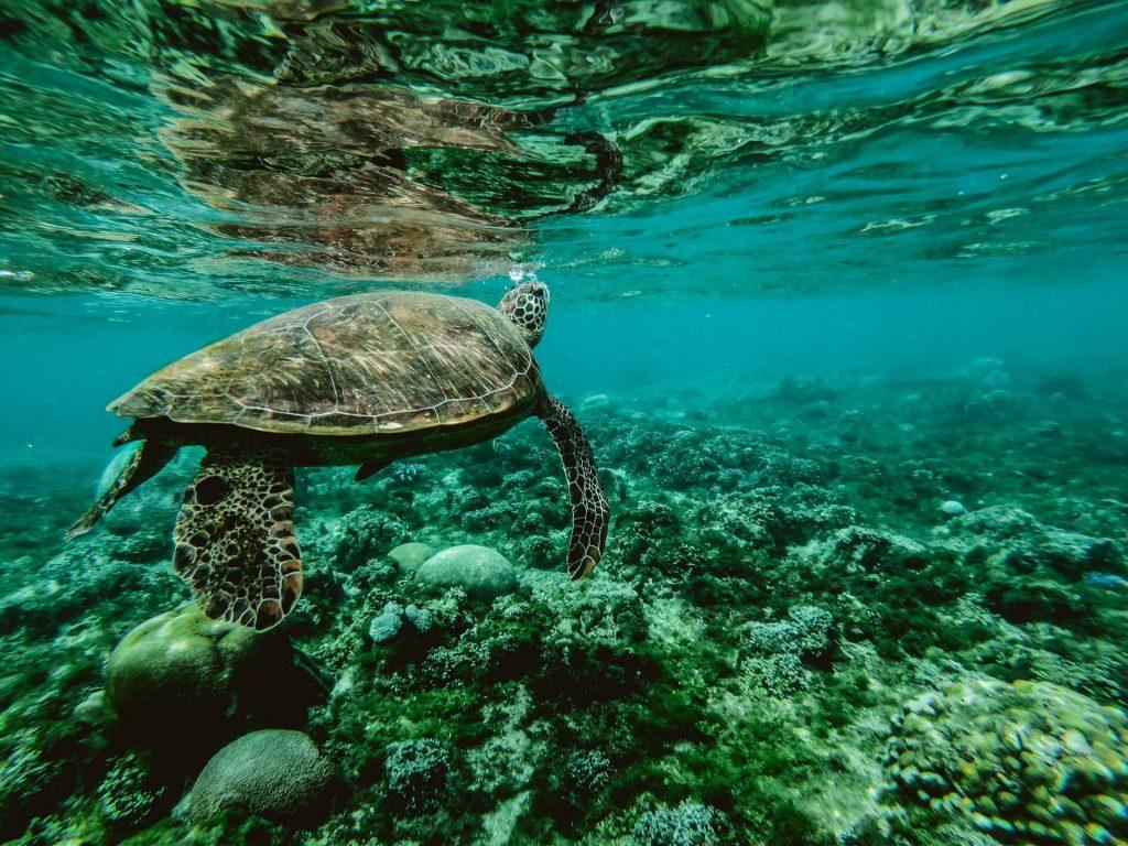 Datos sobre la Contaminación del Océano: ¿Por qué nuestros océanos necesitan su ayuda?