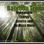 Árbol de bambú - Fuente de energía renovable y mucho más