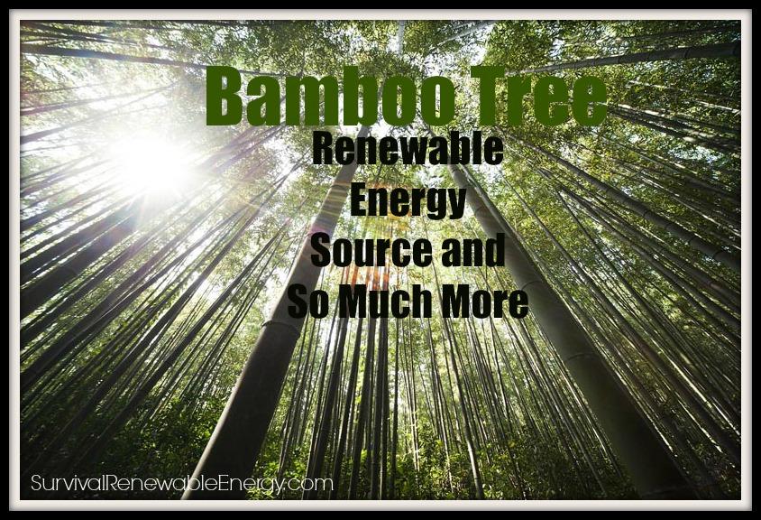Árbol de bambú – Fuente de energía renovable y mucho más