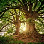 ¿Por qué los árboles son tan importantes para el medio ambiente?