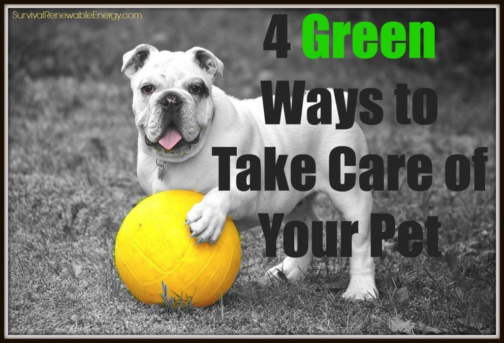 6 maneras verdes de cuidar a su mascota