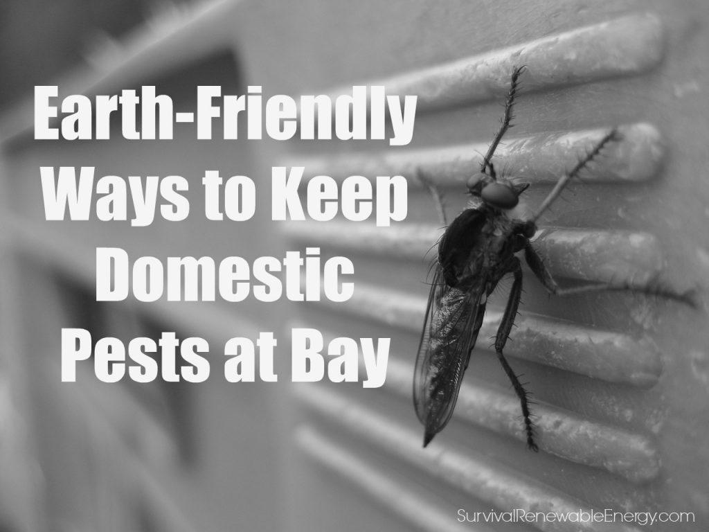 Formas amigables con el medio ambiente para mantener a raya a las plagas domésticas