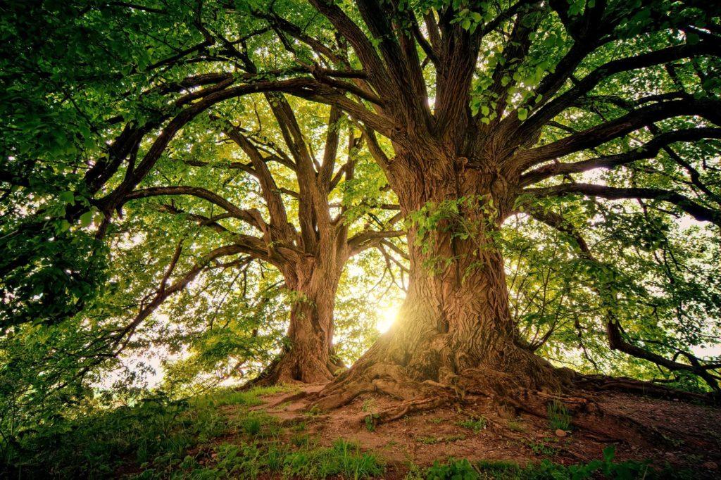 ¿Por qué los árboles son tan importantes para el medio ambiente? 1