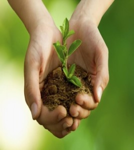 Sustainable Gardening And Its Importance For The Future